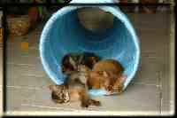 Catnap in the play tunnel