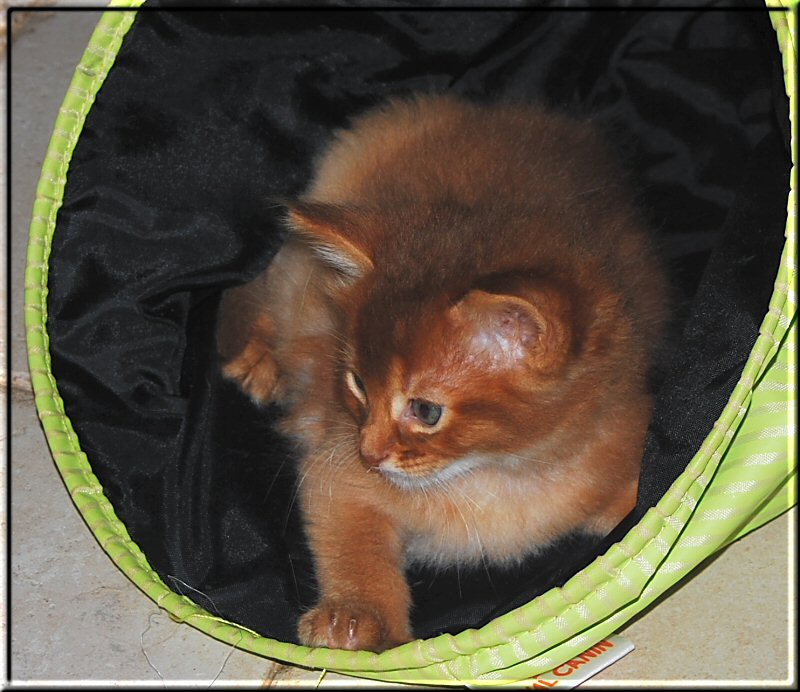 Jasper in play tunnel