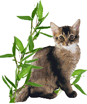 Somali cat Marilyn M. von Torremolinos in the bamboo