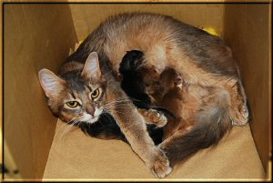 Phoebe and the five kittens